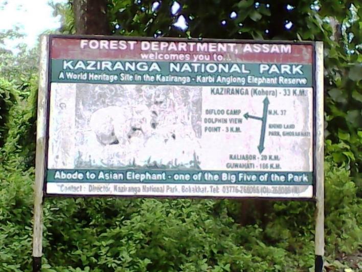 Kaziranga National Park, Indian Rhino Kaziranga, Kaziranga Assam