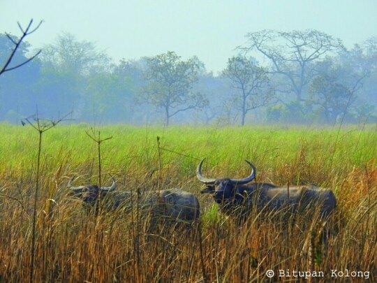 Kaziranga National Park Assam, Kaziranga Wildlife Safari, Kaziranga Hotels Resorts