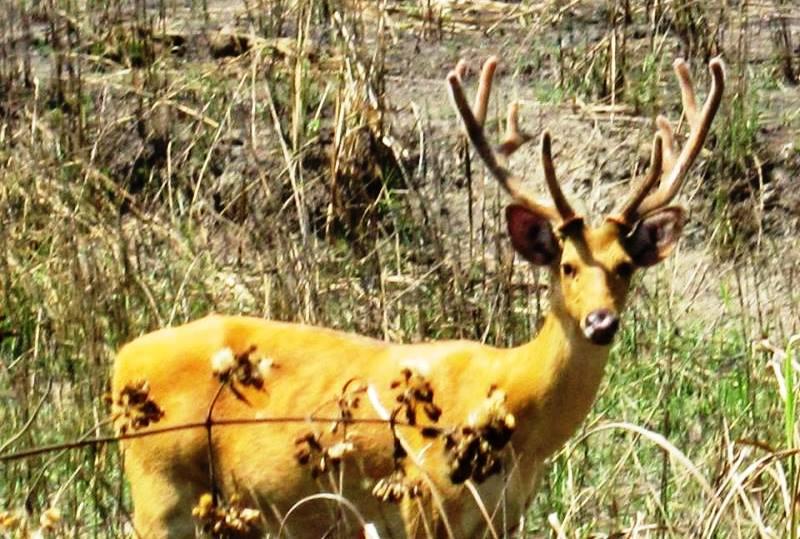 Kaziranga National Park, Kaziranga Hotels, Kaziranga Resorts, Kaziranga Rhinoceros, Awesome Assam