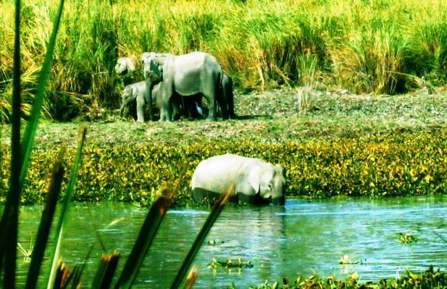 Kaziranga Elephants, Kaziranga National Park Rhino, Assam Kaziranga Safari