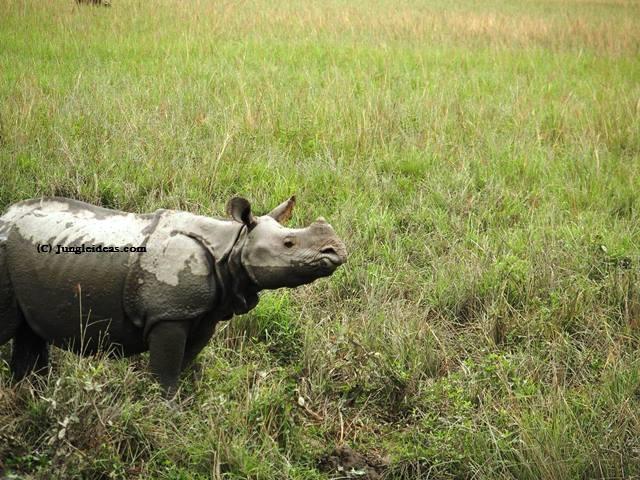 Visit Kaziranga Majuli, Kaziranga Tour, Kaziranga Hotels Resorts, Assam Tourism