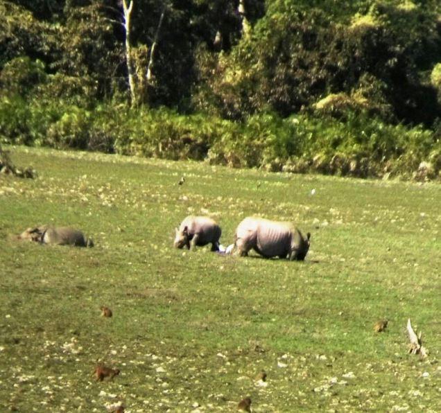 Kaziranga Rhino, Assam Kaziranga National Park, Kaziranga Jungle Safari