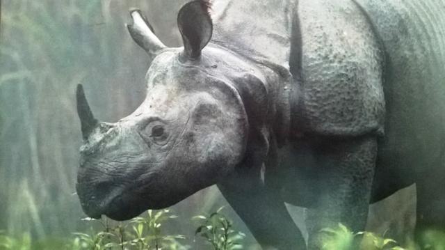 One Horned Rhino Kaziranga, Kaziranga National Park Assam, Kaziranga Safari