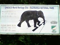 Kaziranga Elephants, Kaziranga National Park Rhinos, Assam Kaziranga Safari