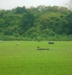 Kaziranga National Park Tiger Reserve, Kaziranga National Park Animals, Kaziranga