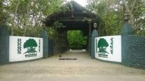Kaziranga Hotels, Kaziranga Resorts, Kaziranga Lodge, Kaziranga, Kaziranga National Park