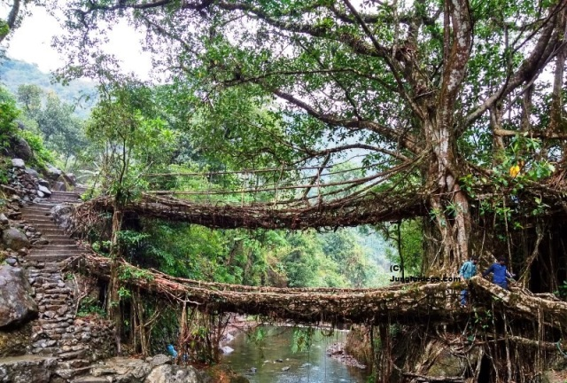 The Jingkieng Nongriat Double Decker Root Bridge at Nongriat ~ Cherrapunji ~ Meghalaya ~ India