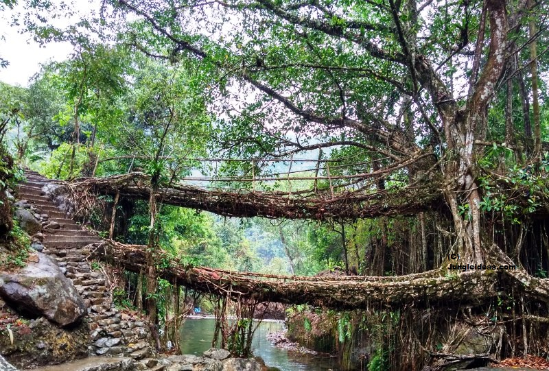 Living Root Bridge, Nongriat Village, Kaziranga, Double Decker Root Bridge