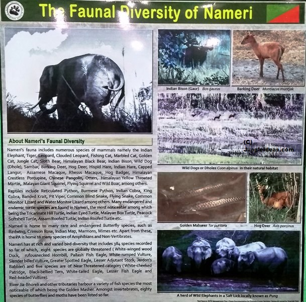 Nameri National Park, Nameri Birds, Nameri Trekking, Kaziranga National Park