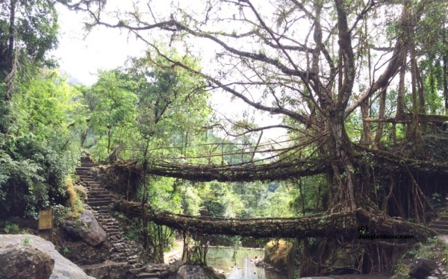 Cherrapunji, Kaziranga National Park, Living Root Bridge, Cherrapunji Hotels, Meghalaya