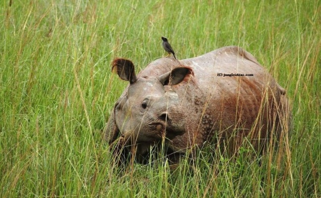 Kaziranga National Park, Assam, Assam Tourism, Places in Assam