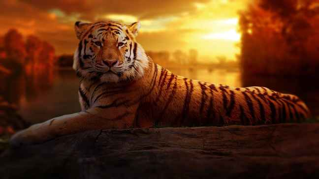 animal big cat jungle safari