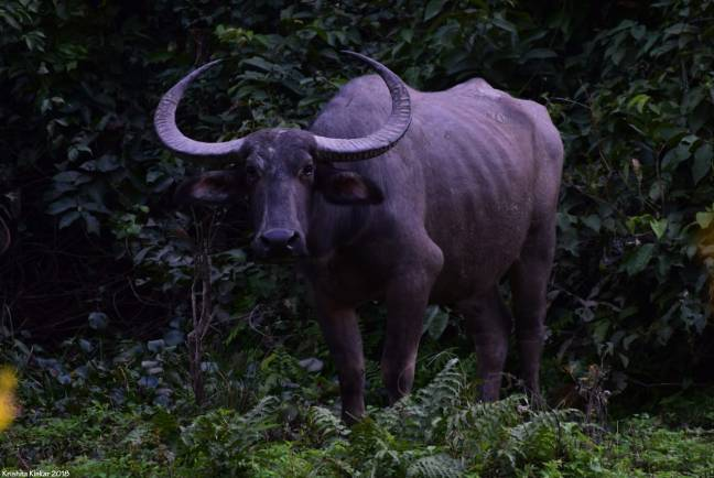 Kaziranga Photography, Photography Tour North East India, Birding Photography Assam