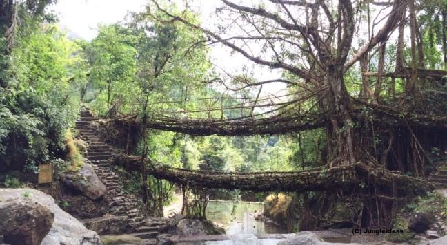 Kaziranga National Park, Living Root Bridge, Meghalaya Trekking, Shillong, Cherrapunji