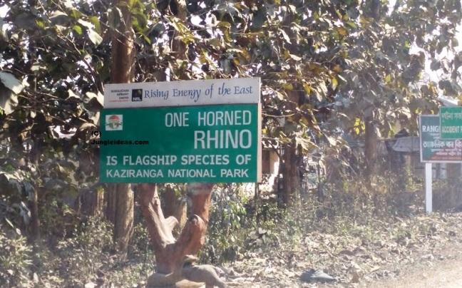 Kaziranga National Park, Kaziranga Orchid Park, Majuli Island, Kaziranga Safari