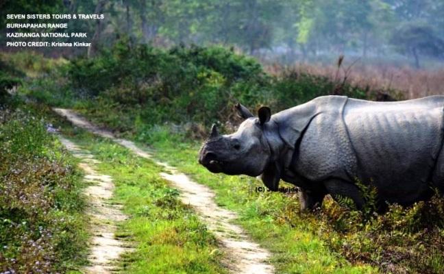 Kaziranga National Park, Assam Tea Gardens, Tea Garden Tour Assam, Kaziranga